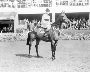 Arkle with Pat Taaffe (b496-01)